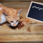 Changes In Your Cat's Diet