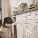kitchen train your pet dog